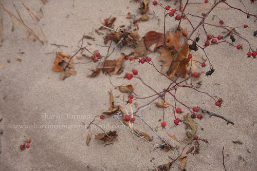 Blog_thanksgiving 207