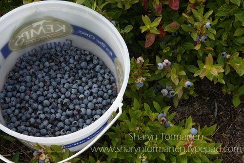 Blog_blueberries_wesas 037