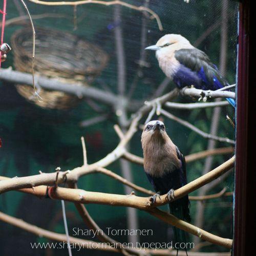 Blog_potter park zoo 067