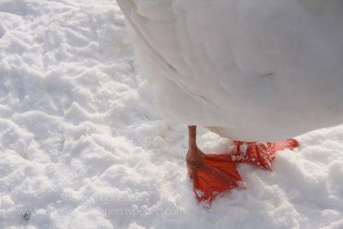 Blog.kensington_farm_snow 083