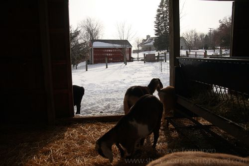 Blog.kensington_farm_snow 086