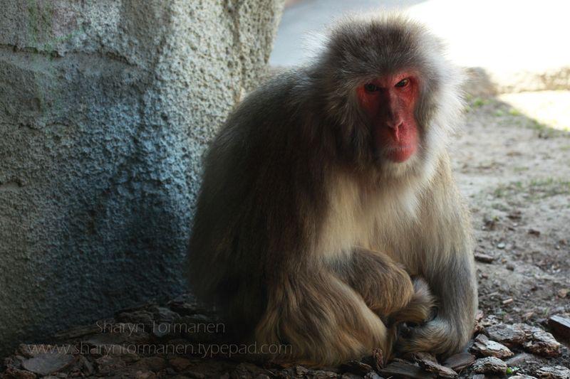 Blog_detroit zoo 038