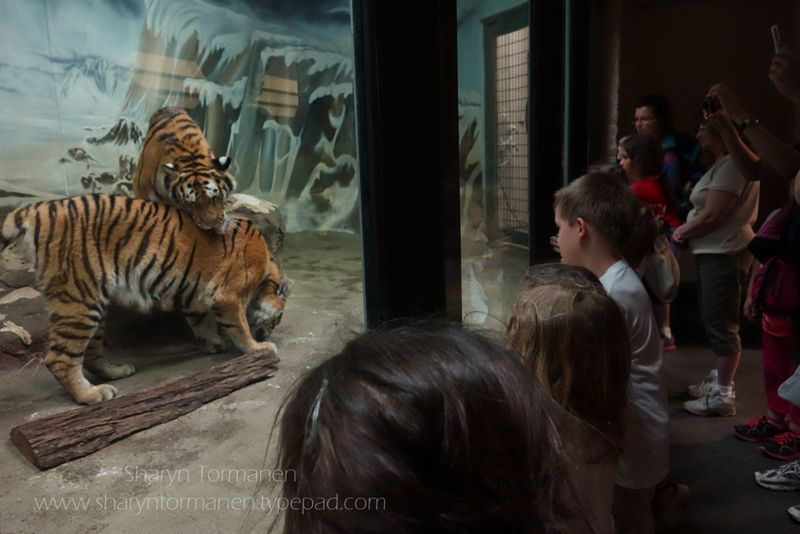 Blog_field trip potter park zoo mark 052-2