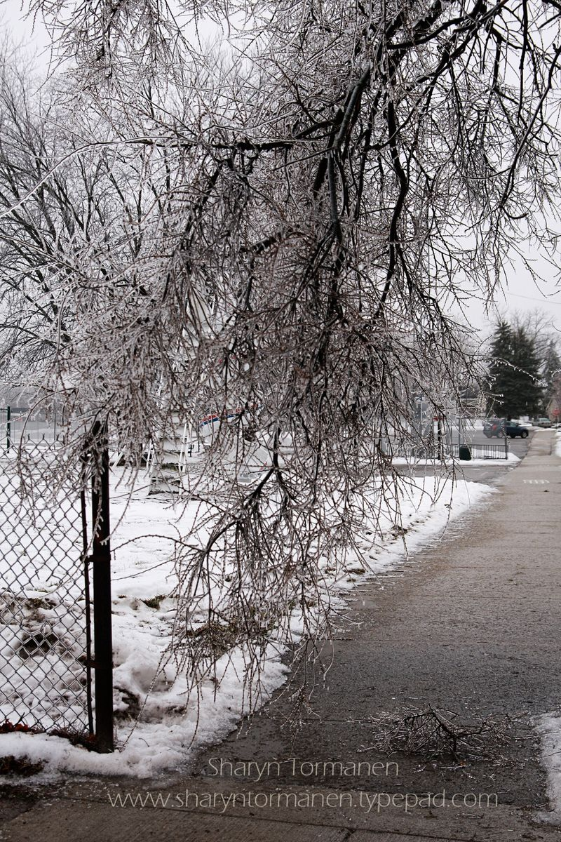 Blog_ice storm part two 055