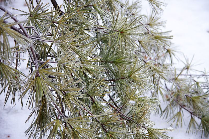 Blog_ice storm part two 070 copy
