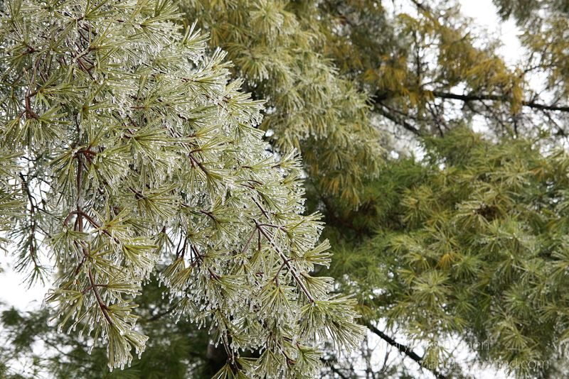 Blog_ice storm part two 073