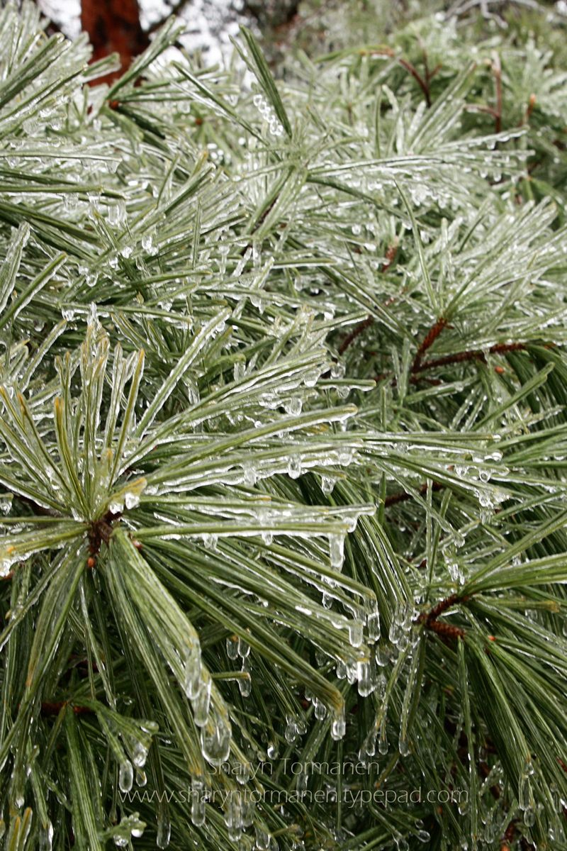 Blog_ice storm part two 090 copy