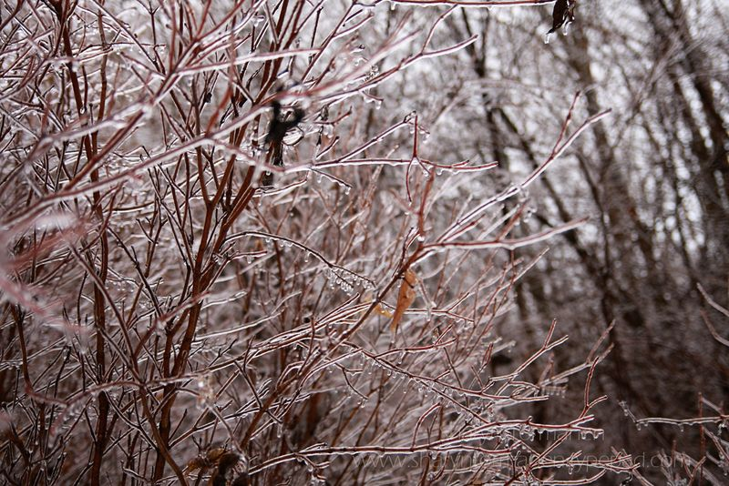Blog_ice storm part two 012