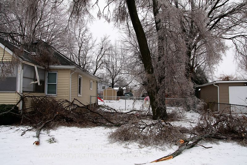 Blog_ice storm part two 014