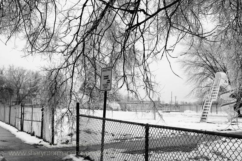 Blog_ice storm part two 033 copy