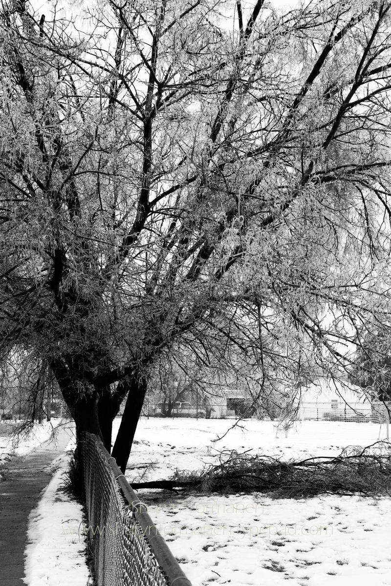 Blog_ice storm part two 028 copy