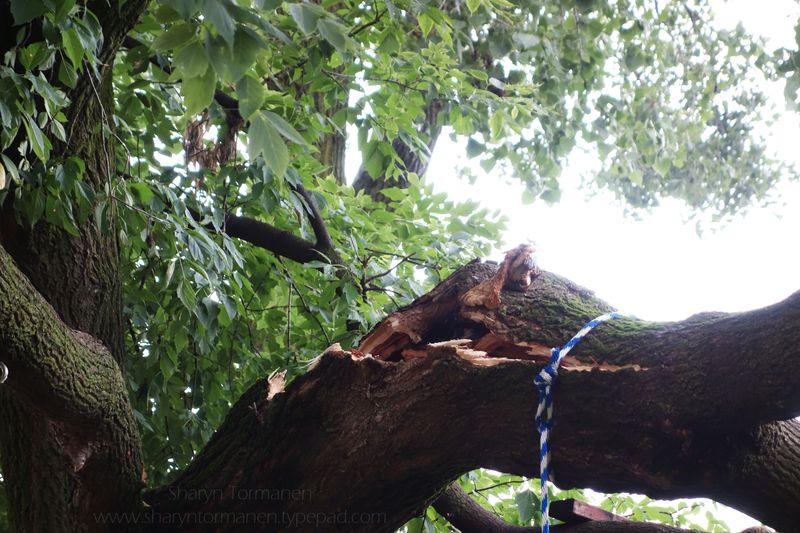 Blog_tree 021