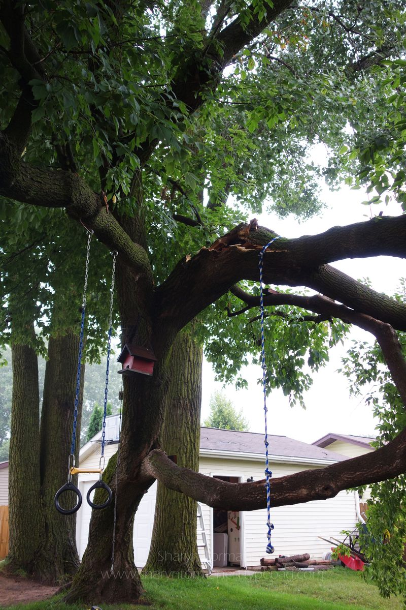 Blog_tree 022