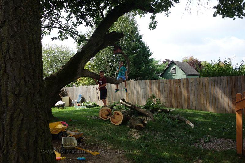 Blog_tree 027