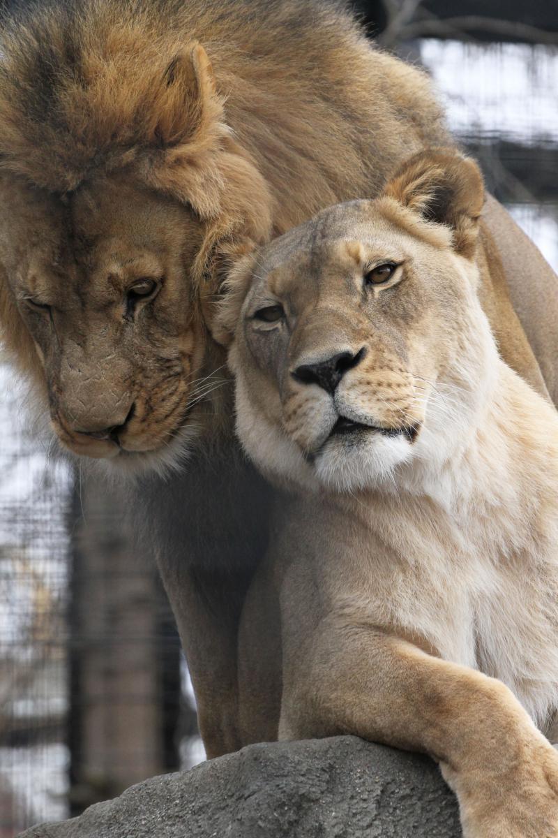 B_PP_Zoo 101