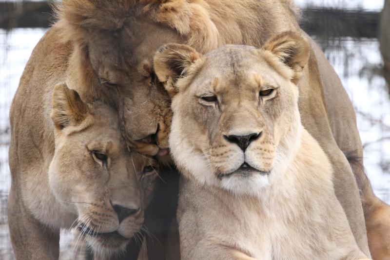 B_PP_Zoo 105
