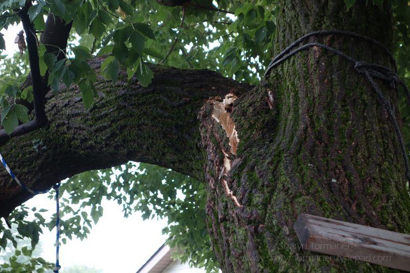 Blog_tree 019