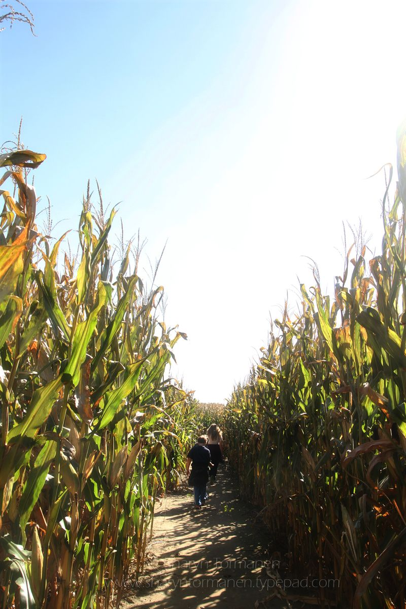 Blog_corn maze_fall 011