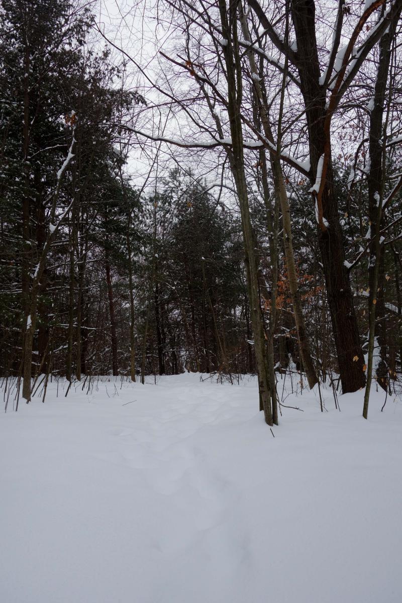 B_feb snowshoe 005