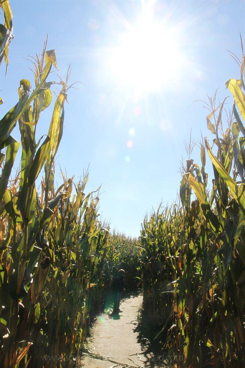 Blog_corn maze_fall 005