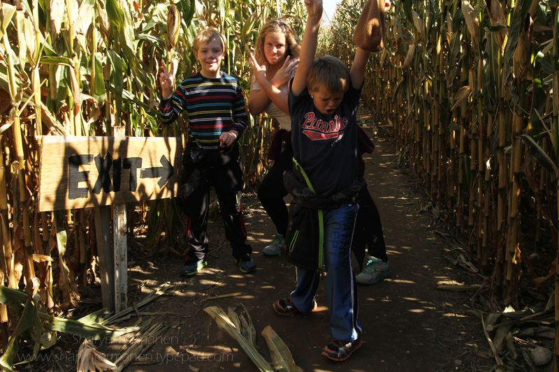 Blog_corn maze_fall 020