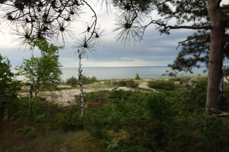 B_North Manitou Island 205