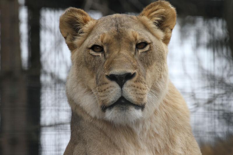B_PP_Zoo 098
