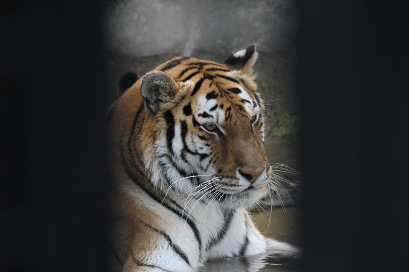 Zoo_cousins 309