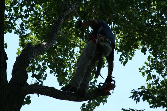 Tree_019